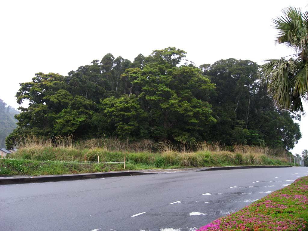 青島村古墳5号墳が所在する丘陵...